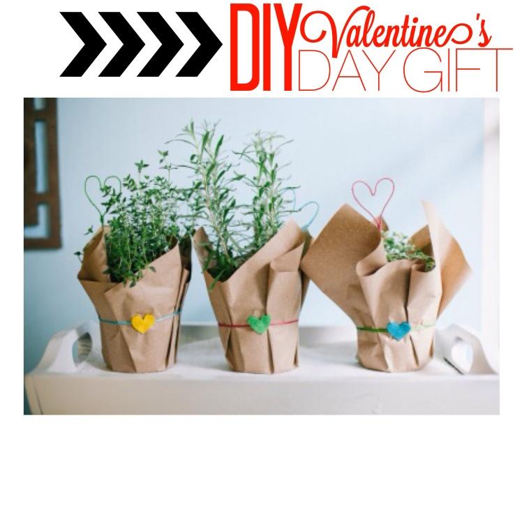 diy valentine's herb plant